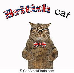 British cat in glasses 2