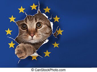British cat looking through hole in EU paper flag
