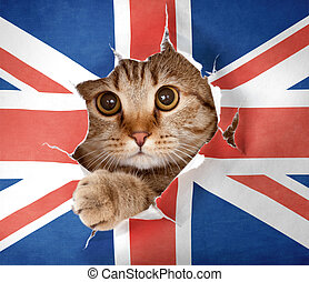 British cat looking up through hole in paper Great Britain...