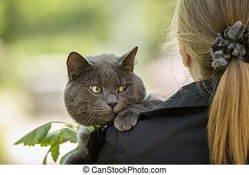 british cat on shoulder