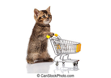 british cat with shopping cart isolated on white. kitten osolated