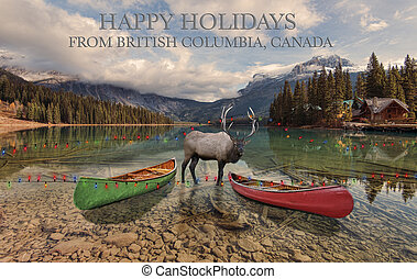 British Columbia Holidays - An elk has it's antlers caught ...