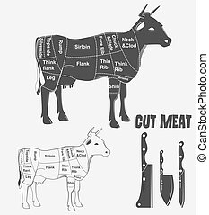 British cuts of veal, beef or animal diagram meat. Vector