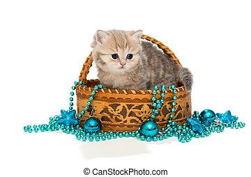 British kitten and Christmas toys - British kitten in a...