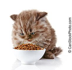 British long hair kitten and cat food