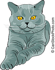 British shorthair blue cat lies and looks - British...