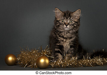 British Shorthair kitten with Christmas ornament on a gray ...