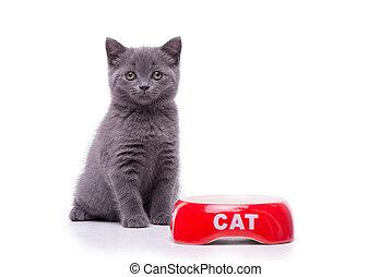 brittisk, shorthair, litet, katt, isolerat