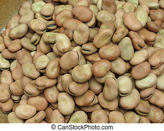 Broad bean background - Broad beans (Vicia faba) legumes...