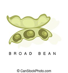 Broad Bean Pod, Infographic Illustration With Realistic Pod-Bearing Legumes Plant And Its Name
