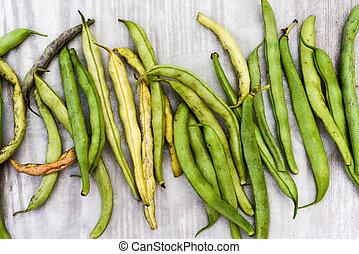 Broad beans, home grown organic broad or runner beans freshly picked