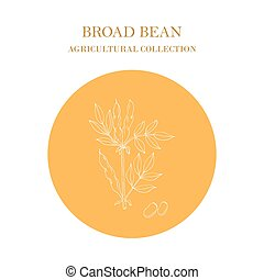 Broad beans or fava beans hand drawn