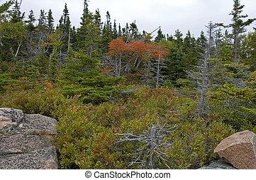 Broad Cove Mtn Trail, Cape Breton Highlands NP, Nova Scotia, Canada