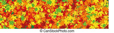 Broad image to autumn theme with fallen leaves
