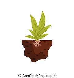 Broad leaves with roots in the soil. Vector illustration.