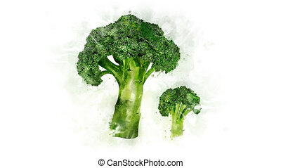 Broccoli Illustration for the overlay - A beautiful...