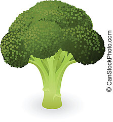Broccoli illustration - Illustration of a fresh green piece...