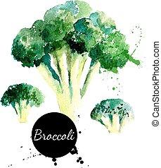 broccoli., mano, dibujado, pintura de acuarela, blanco,...