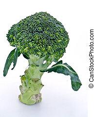 Broccoli on a white background.