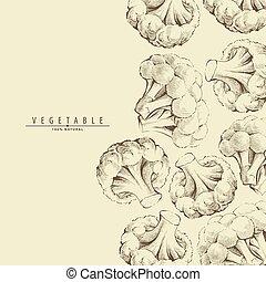Broccoli or cauliflower background - Hand drawn broccoli or...