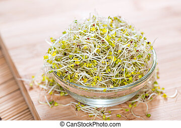 Broccoli Sprouts in a bowl