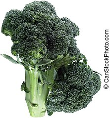 broccoli - isolated broccoli