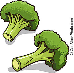 Broccoli vector illustration isolated on a white background