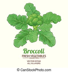 broccoli vector isolated - broccoli plant vector isolated on...
