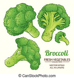 broccoli vector isolated - broccoli vector set on white...