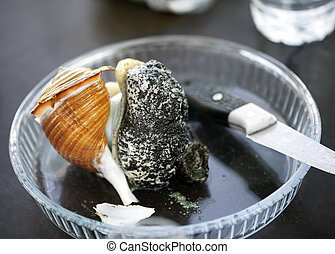 Brocken large raw sea snail on glass plate