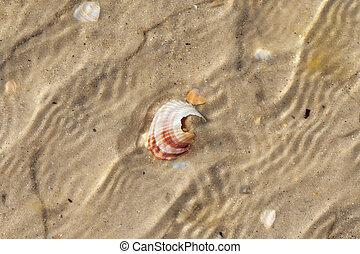 Brocken seashells in water on sand beach at hot sun summer day