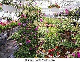 broeikas, planten, en, bloemen
