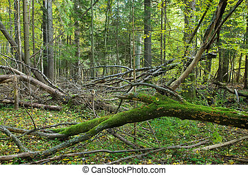 Broken branches lying