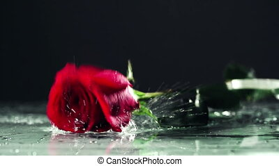 Broken Heart - Close up of rose falling in rain