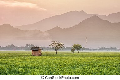 Broken Hut, in the middle of rice field, with vast rice plants and massive mountains in the background