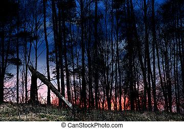 Broken tree at sunset