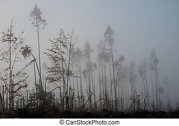 Broken tree during storm gales. A mist of morning mist over a broken forest after a huge wind.