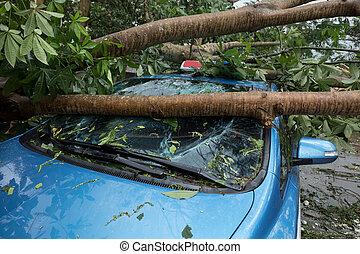 Broken tree fallen on top of parking car, damaged car after ...