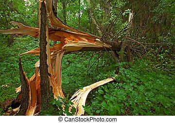 Broken tree in the wood