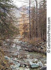 Broken tree on the forest stream in the taiga