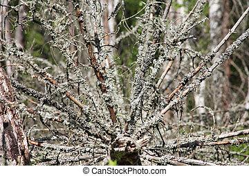 Broken tree with moss