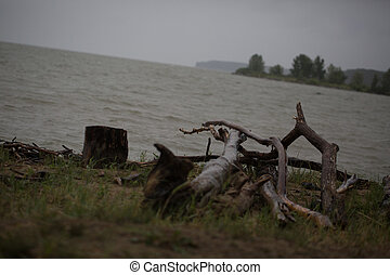 Broken trees on the banks of the river