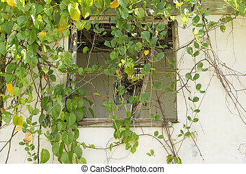 Broken Window of Abandoned House Behind Vines
