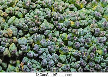 brokoli detail - brokoli fresh green vegetables in large...