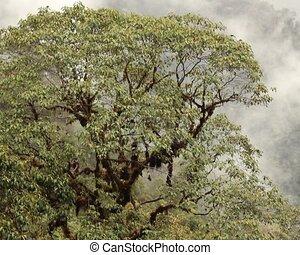 bromeliad, chargé, arbre, cloudforest