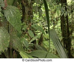 Bromeliad flowering in cloudforest