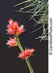 Bromeliad Flowers and Stem