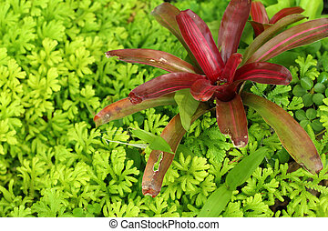 Bromeliad flowers in garden at the park