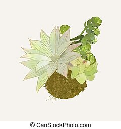 Bromeliads in hanging basket , sketch vector.