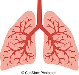 (bronchial, lidský, plíce, system)